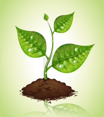 Illustration for Plant vector - Royalty Free Image