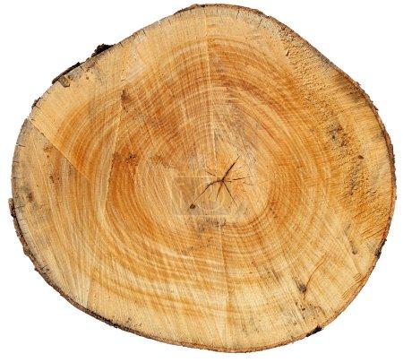 Photo pour Coupe transversale du tronc d'arbre isolé sur fond blanc - image libre de droit