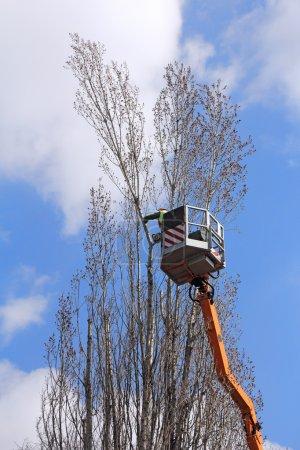 Photo pour Un travailleur avec une tronçonneuse couper les branches d'arbres sur le haut - image libre de droit