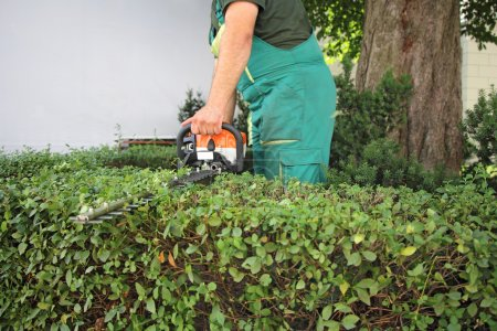 Man trimming hedge