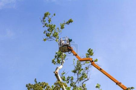 Photo pour Un travailleur avec une tronçonneuse, tailler les branches d'arbres sur la haute plate-forme mobile hydraulique - image libre de droit