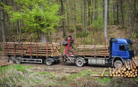 Photo pour Camion dans les bois chargé de bois - image libre de droit