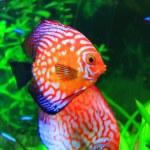 Cute little fish in an aquarium...