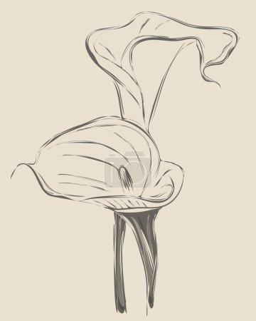 Vector flower calla twin