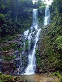Mindorói bivaly vízesések