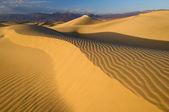 """Постер, картина, фотообои """"Мескит – плоские дюны"""""""