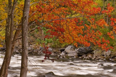 Photo for Autumn, Pigeon River, Great Smoky Mountains, Tennessee, USA - Royalty Free Image