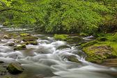 Oconaluftee Creek