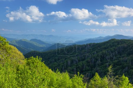 Photo for Summer landscape Great Smoky Mountains National Park, North Carolina, USA - Royalty Free Image