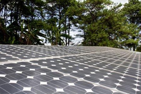 Foto de Célula solar en el bosque - Imagen libre de derechos
