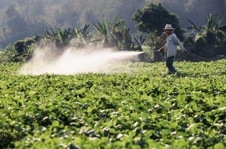 Farmer spraying pesticide on soy field