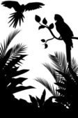 Silhouette of macaw and tropical forest background
