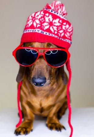 Photo pour Chien en chapeau rouge holyday et lunettes - image libre de droit