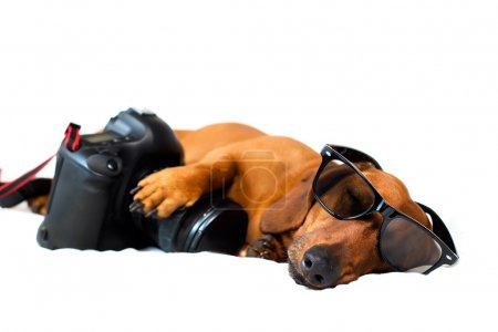 Dog with the camera