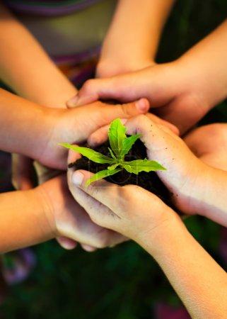 Photo pour Les mains des enfants tenant la jeune plante. Prendre soin du concept . - image libre de droit