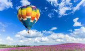 Colorful hot air balloon over pink flower fields with blue sky background