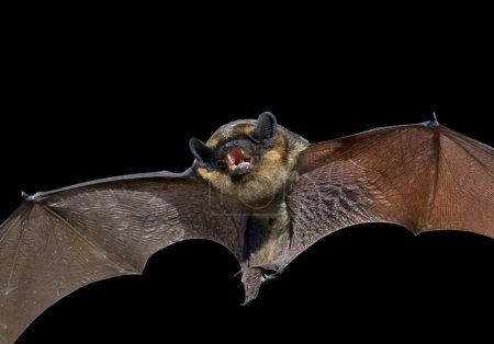 small bat.