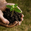 Farmer hand holding a fresh young plant. Symbol of...
