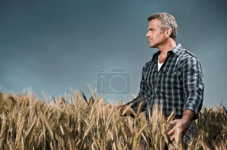 Farmer has care of his wheat field