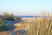 Natural Sandy Hook