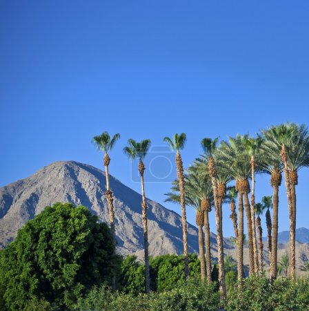 Palm Springs View