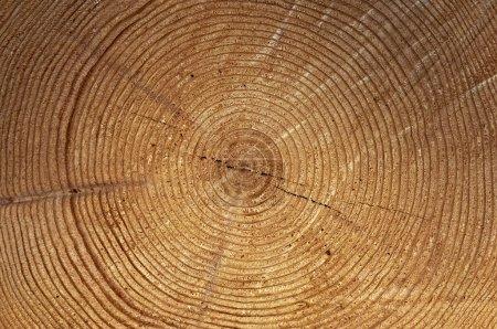 Foto de Primer plano de los anillos de árboles - Imagen libre de derechos