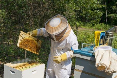 Beekeeper inspecting her beehives