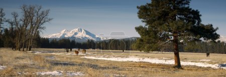 Ranch Livestock at the Base of Three Sisters Mountains Oregon