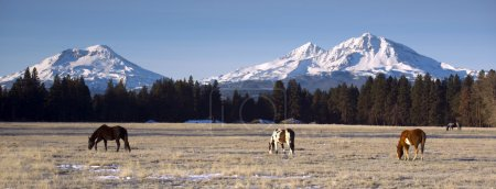 Ranch Animals at the Base of Three Sisters Mountains Oregon
