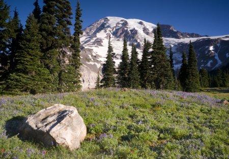 Majestic Snowcapped Mountain Peak Mt. Rainier Wildflowers Cascade Range