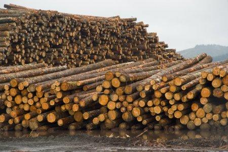 Photo pour La pluie tombe sur une pile d'arbres en attente de transformation - image libre de droit