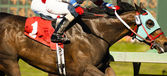 One Horse Rider Jockey Come Across Race Line Photo Finish