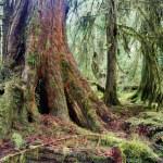 A walk through the rainforest reveals much beauty ...