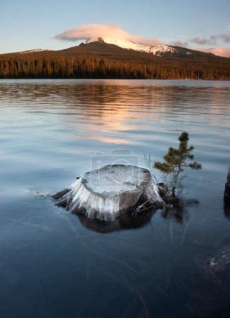 Partially Submerged Stump Lakefront Big Lake Mt Washington Oregon