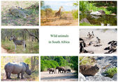 African wild animals collage, fauna diversity in Kruger Park, South Africa