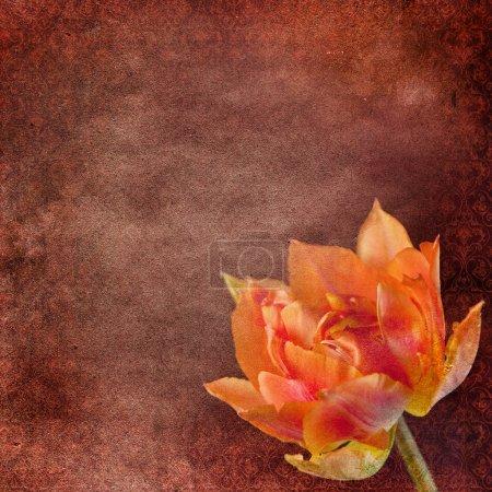 Vintage shabby fond chic avec tulipe