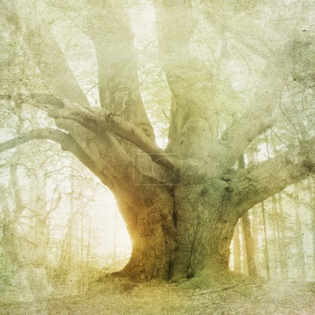 Photo pour Vintage forêt paysage arrière-plan - image libre de droit