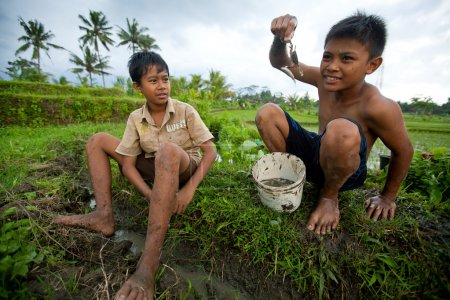 Poor children catch small fish in a ditch near a rice field