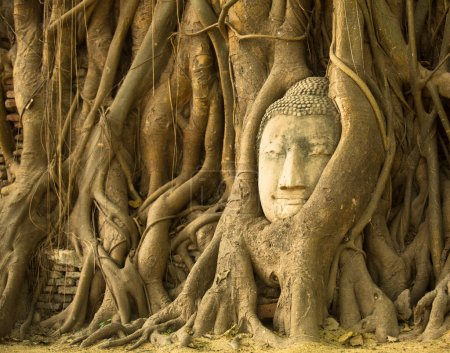 Photo for The Head of Buddha in Wat Mahathat, Ayutthaya, Thailand. Wat Mahathat - famous temple in Ayutthaya (capital of Siam 1350-1767) Buddha head in the roots of the tree - symbol of Ayutthaya. - Royalty Free Image