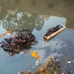 Bagmati River (Cremation ceremony) in Kathmandu, N...