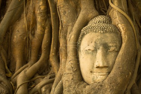 Head of Buddha in the roots of the tree