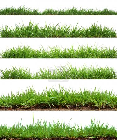 Photo for Grass on white background - Royalty Free Image