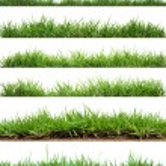Grass on white background...