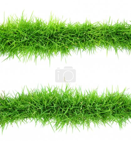 Photo for Top view of grass on white background - Royalty Free Image