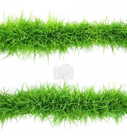 Photo pour Vue de dessus de l'herbe sur fond blanc - image libre de droit