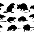 Rat silhouettes on the white background...