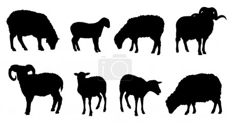 Illustration for Sheep silhouettes on the white background - Royalty Free Image