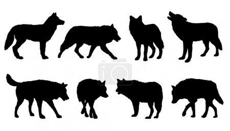 Illustration pour Silhouettes de loup sur le fond blanc - image libre de droit