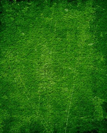 Photo pour Fond de mousse verte avec quelques nuances douces sur elle - image libre de droit