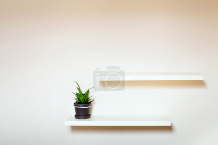 Photo for Two shelves on the white wall and green plant in pot - Royalty Free Image